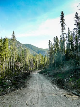 Along the way on the logging road.